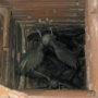 Vogelnesten verwijderen in het schoorsteenkanaal
